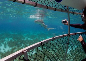 Cage Diving with Tiger Sharks in the Grand Bahamas